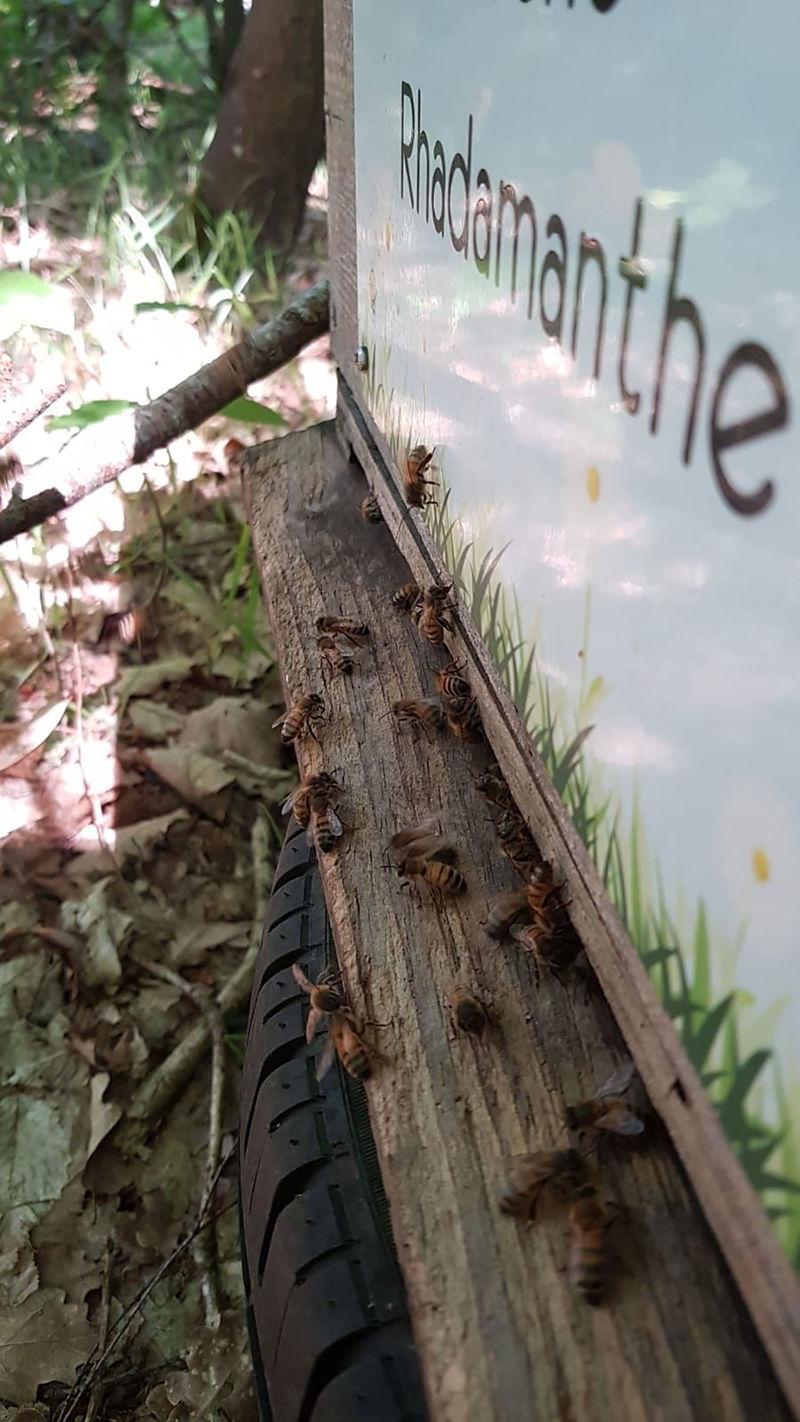 La ruche Rhadamanthe