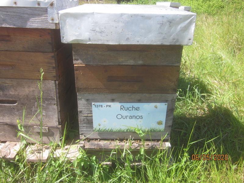 La ruche Ouranos
