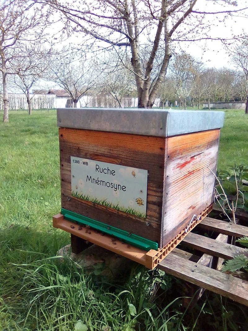 La ruche Mnémosyne