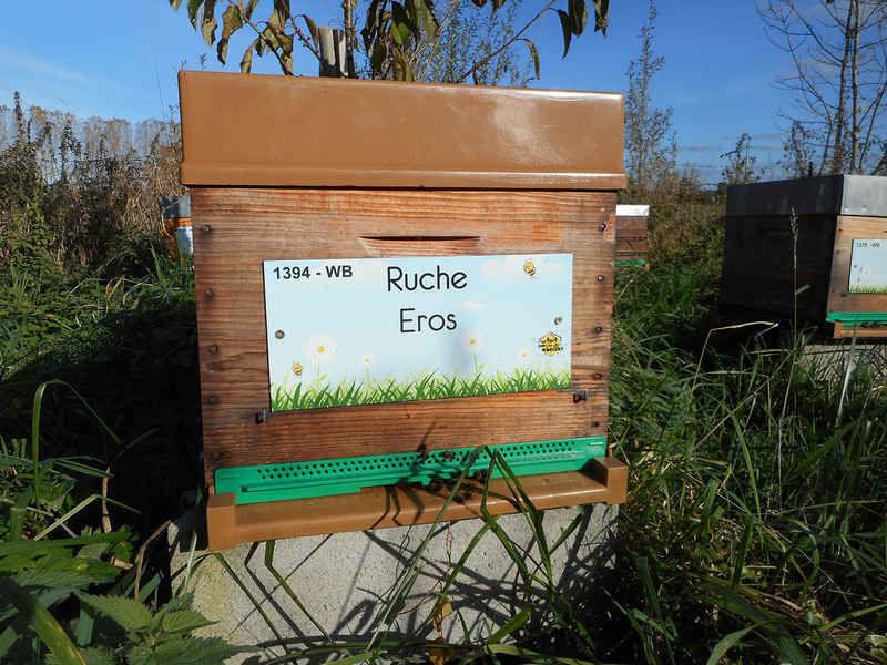 La ruche Eros