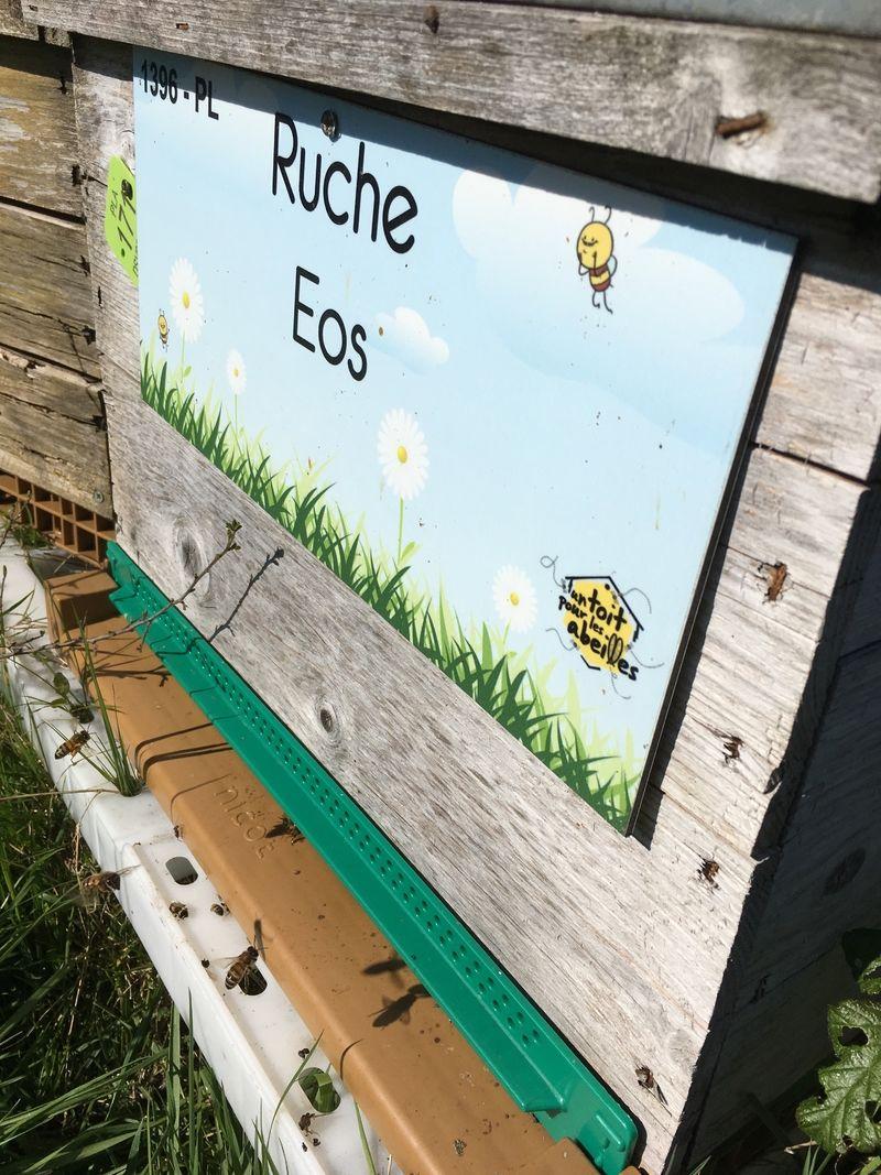 La ruche Eos