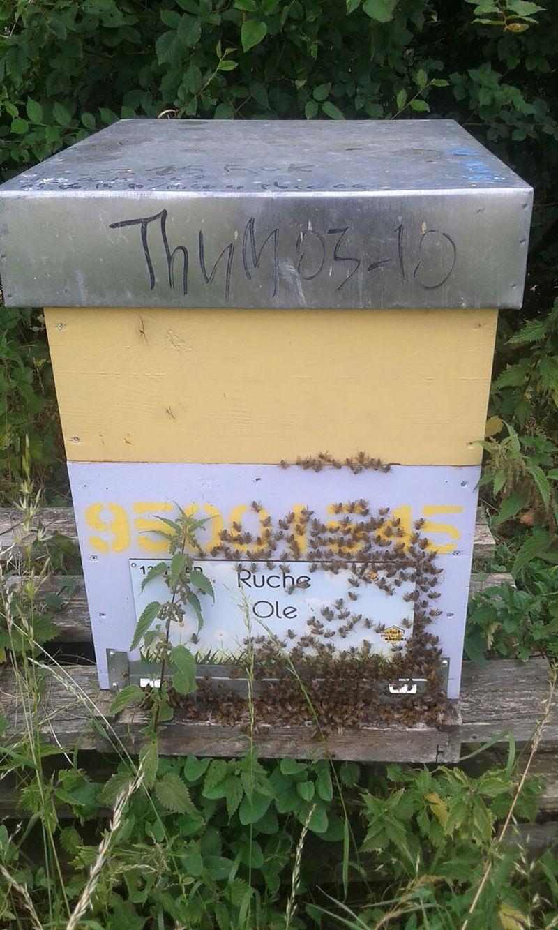 La ruche Ole