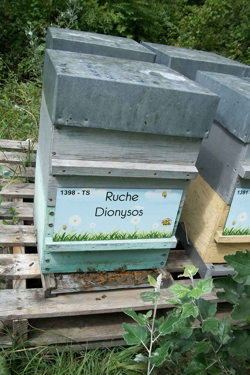La ruche Dionysos