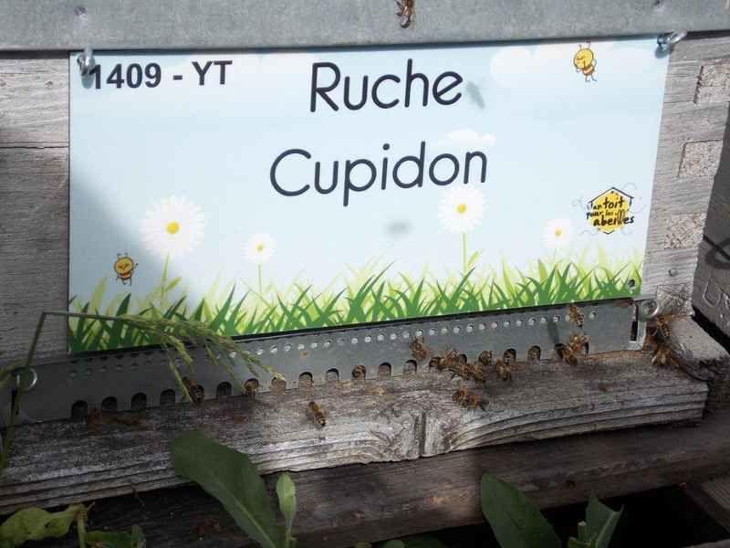 La ruche Cupidon