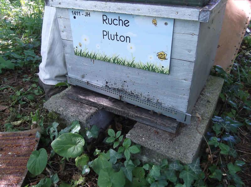 La ruche Pluton