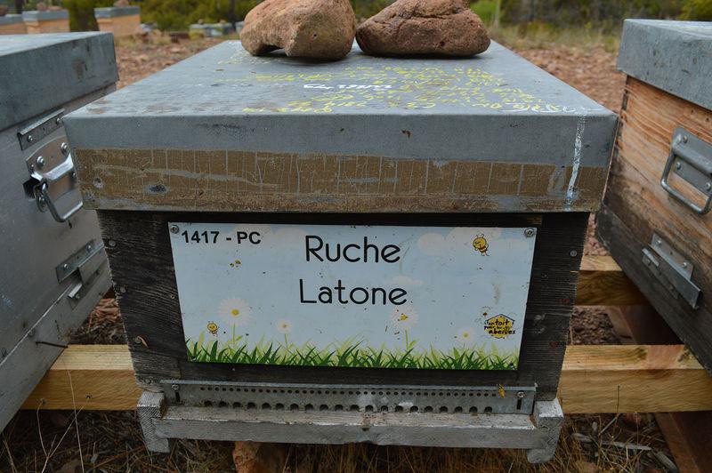 La ruche Latone