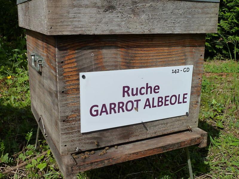 La ruche Garrot albeole