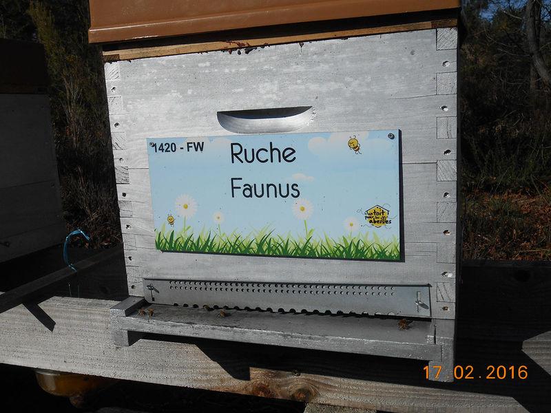 La ruche Faunus
