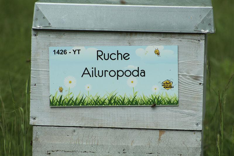 La ruche Ailuropoda