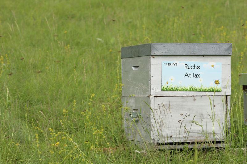 La ruche Atilax