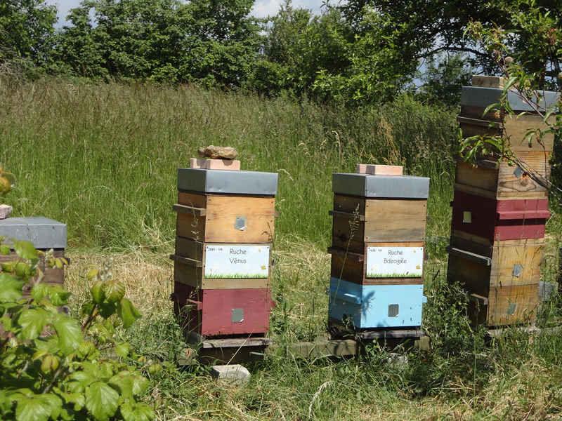 La ruche Bdeogale
