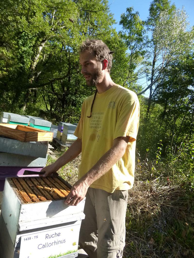 La ruche Callorhinus