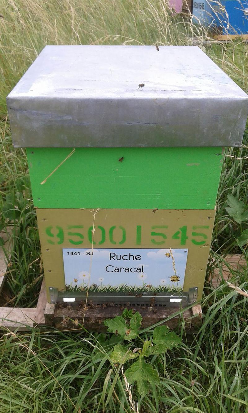 La ruche Caracal