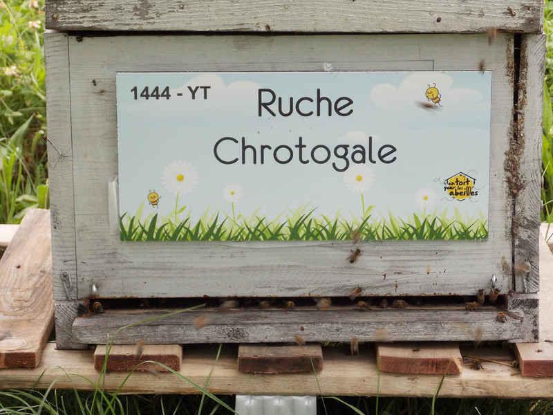 La ruche Chrotogale