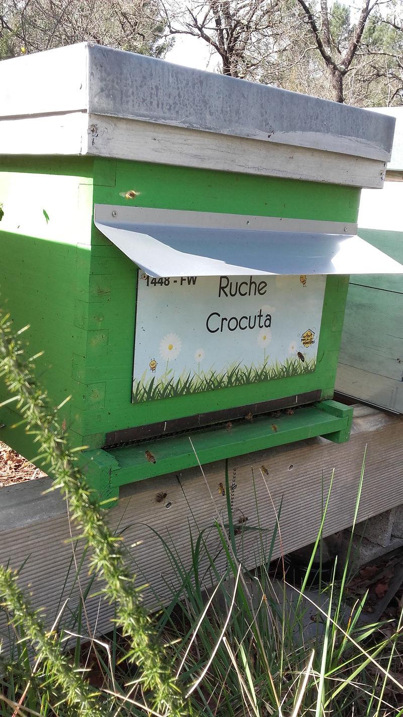La ruche Crocuta