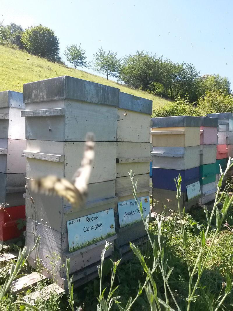 La ruche Cynogale