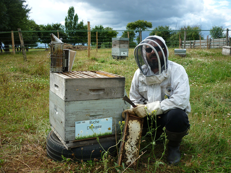 La ruche Dologale