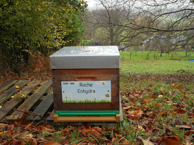 La ruche Enhydra