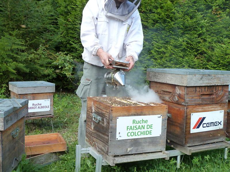 La ruche Faisan de colchide