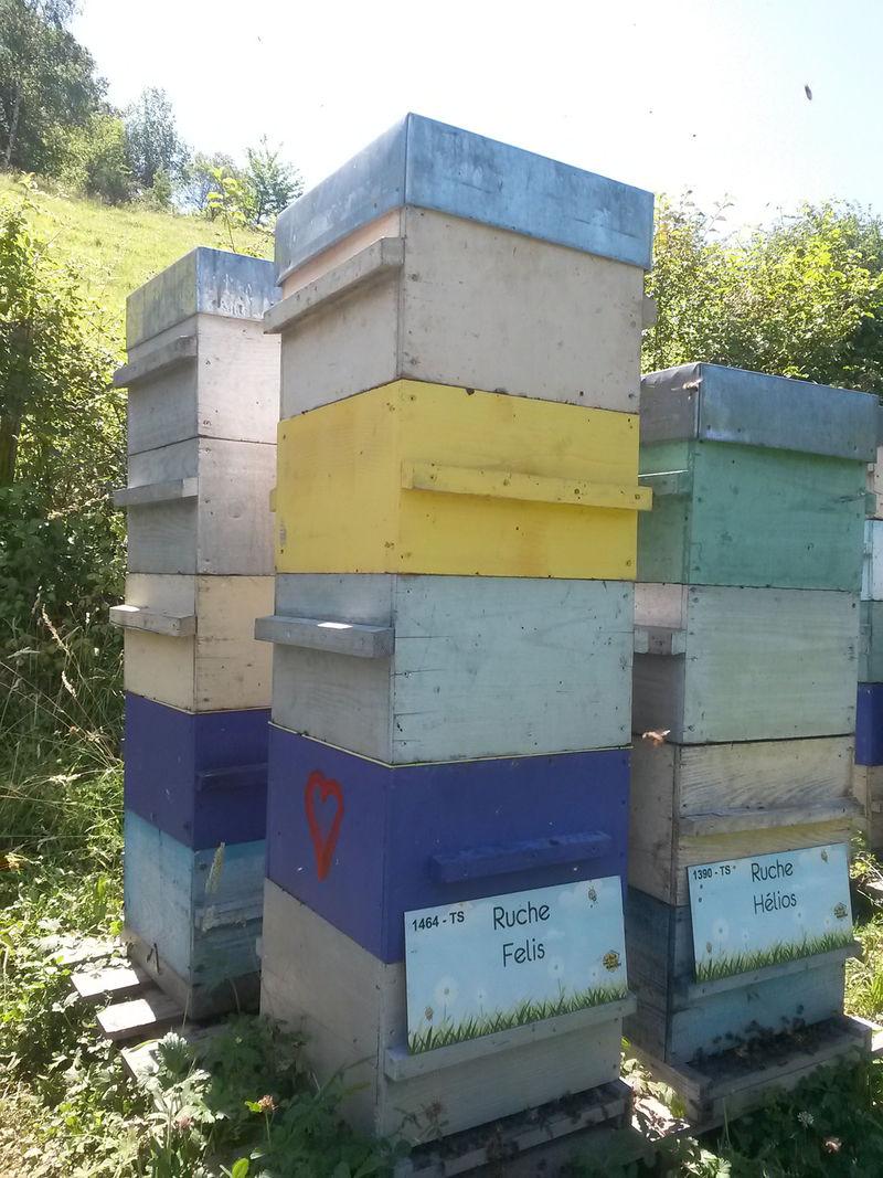 La ruche Felis