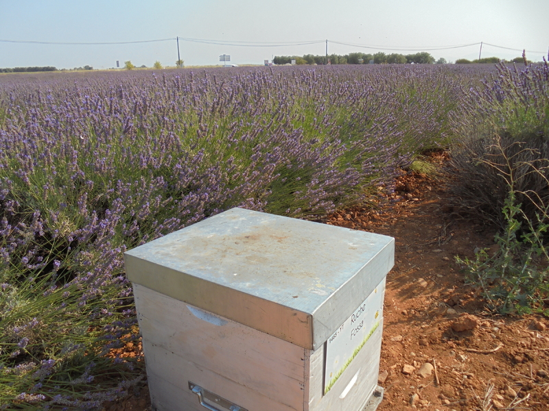La ruche Fossa