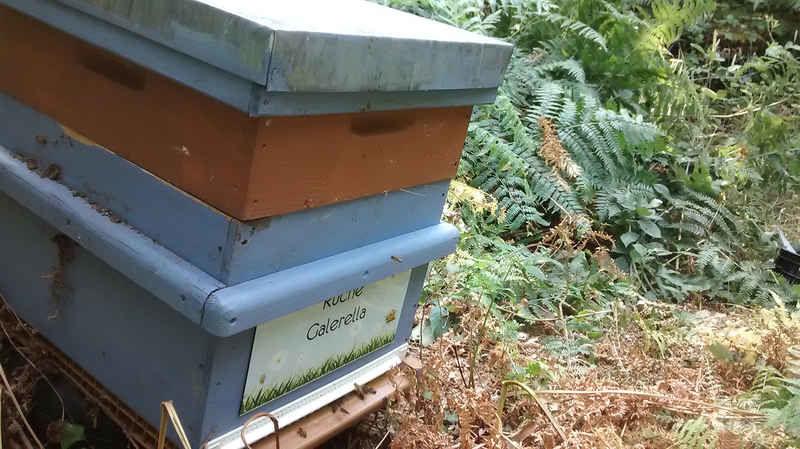 La ruche Galerella
