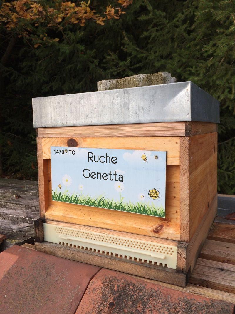 La ruche Genetta