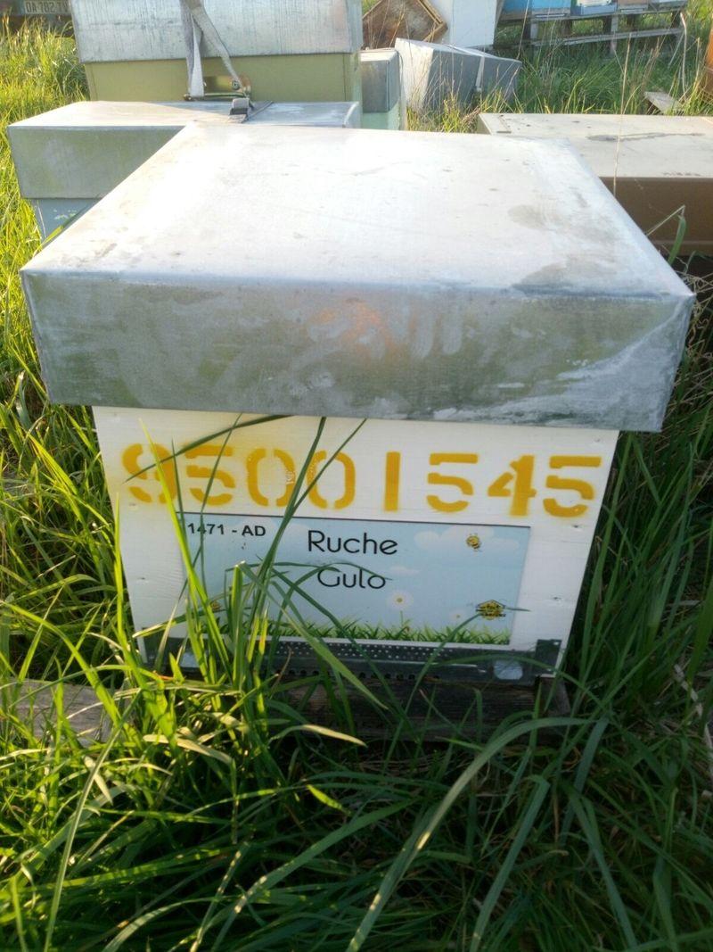 La ruche Gulo