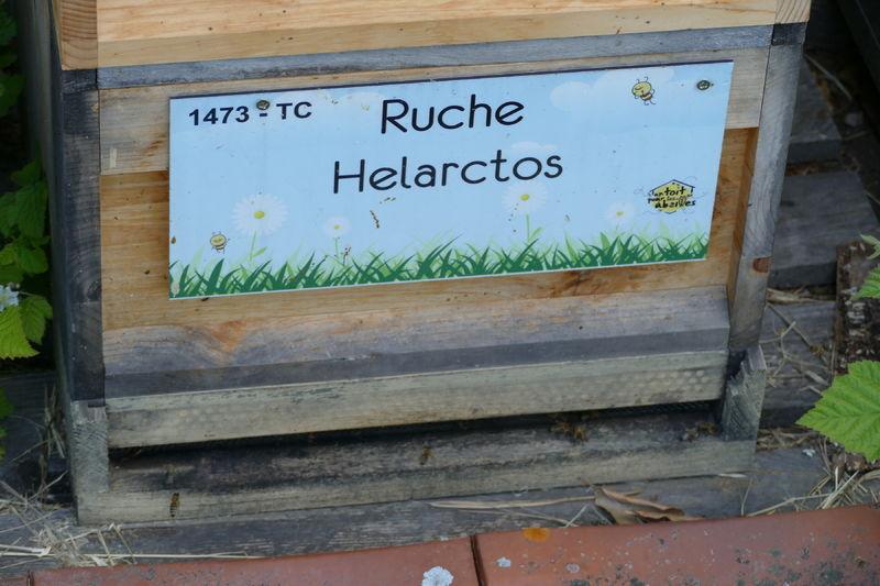 La ruche Helarctos