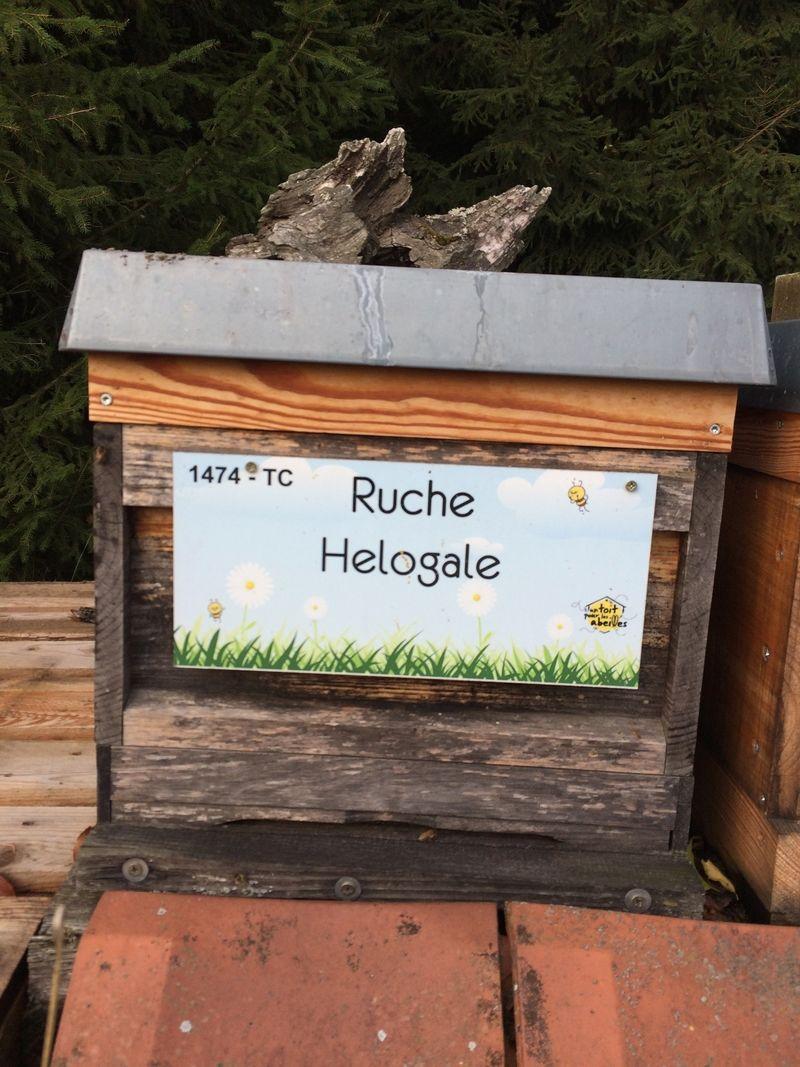 La ruche Helogale