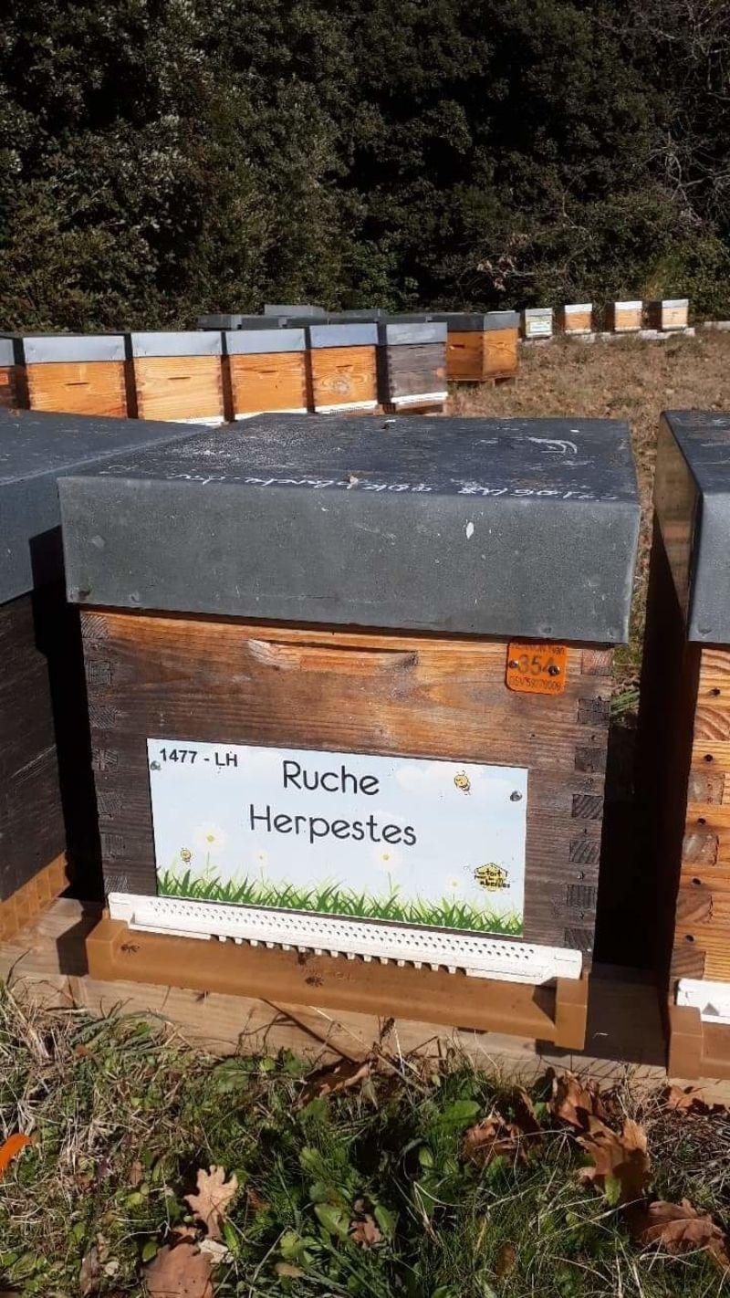 La ruche Herpestes