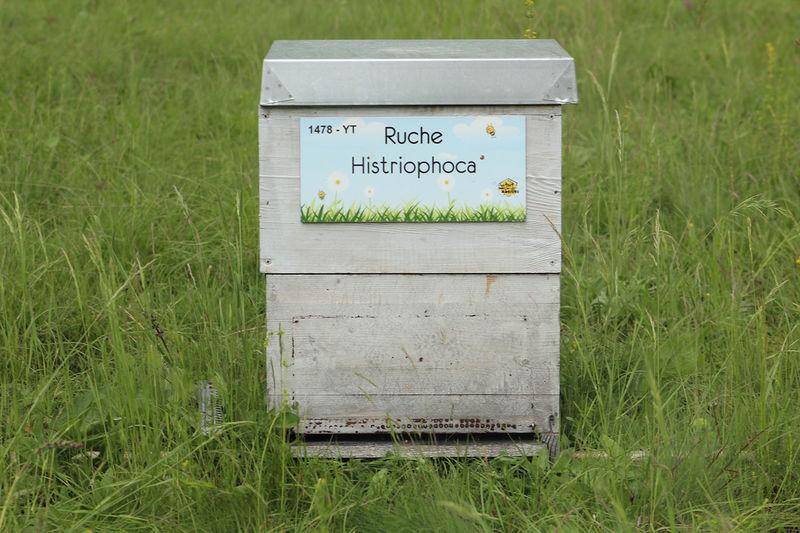 La ruche Histriophoca