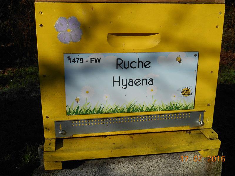 La ruche Hyaena