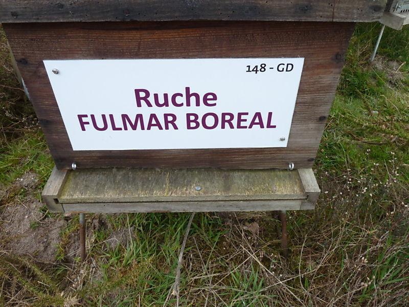 La ruche Fulmar boréal