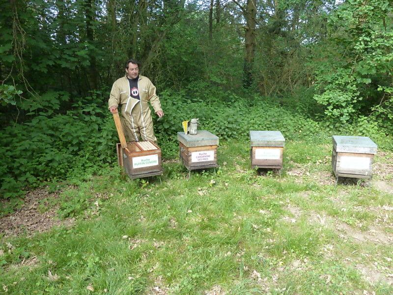 La ruche Puffin cendre