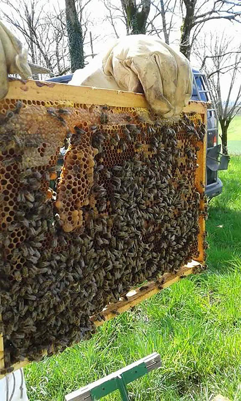 La ruche Lutrogale