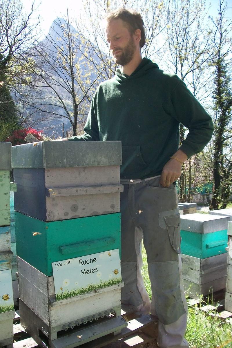 La ruche Meles