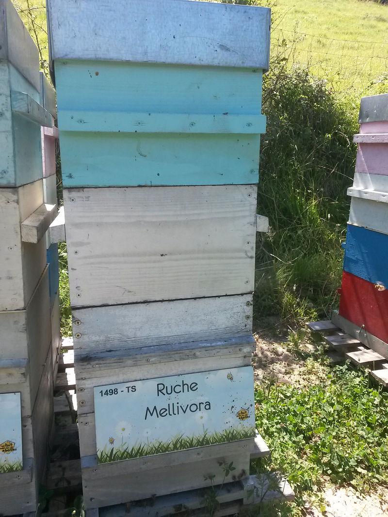 La ruche Mellivora