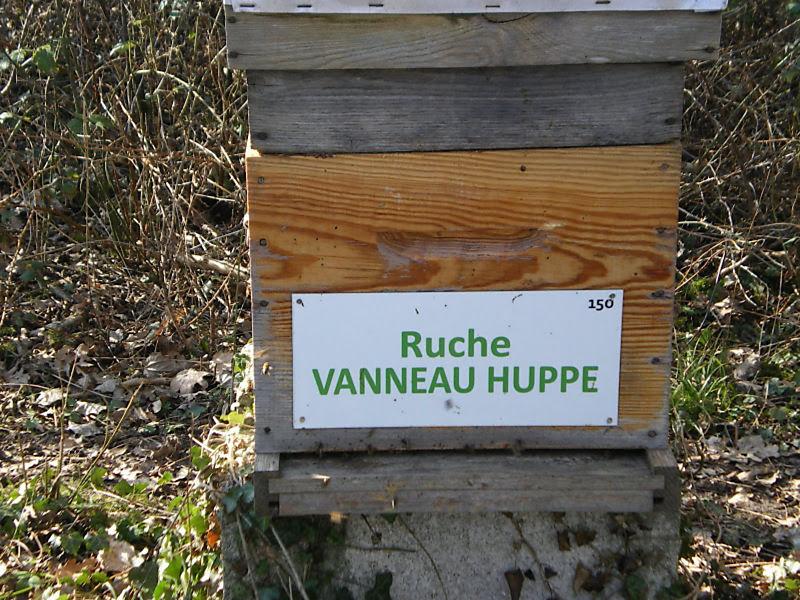 La ruche Vanneau huppé