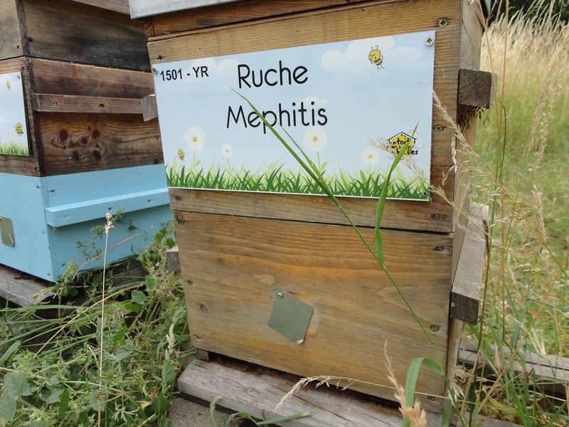 La ruche Mephitis
