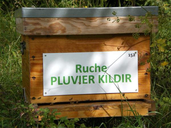 La ruche Pluvier kildir