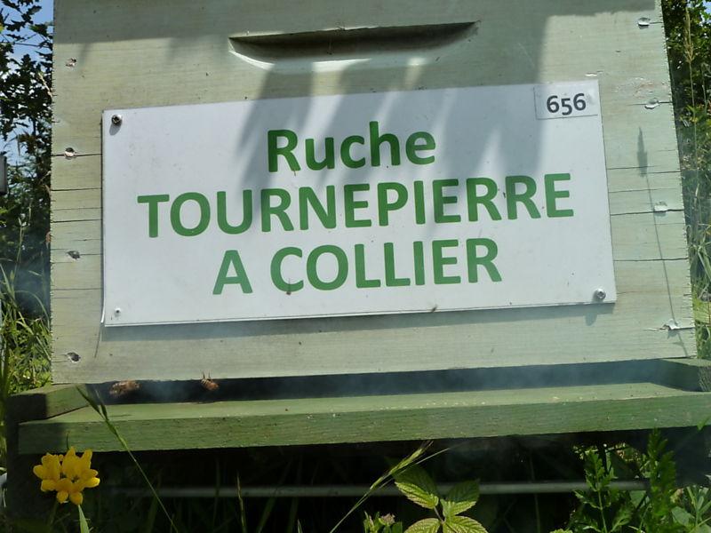 La ruche Tournepierre a collier