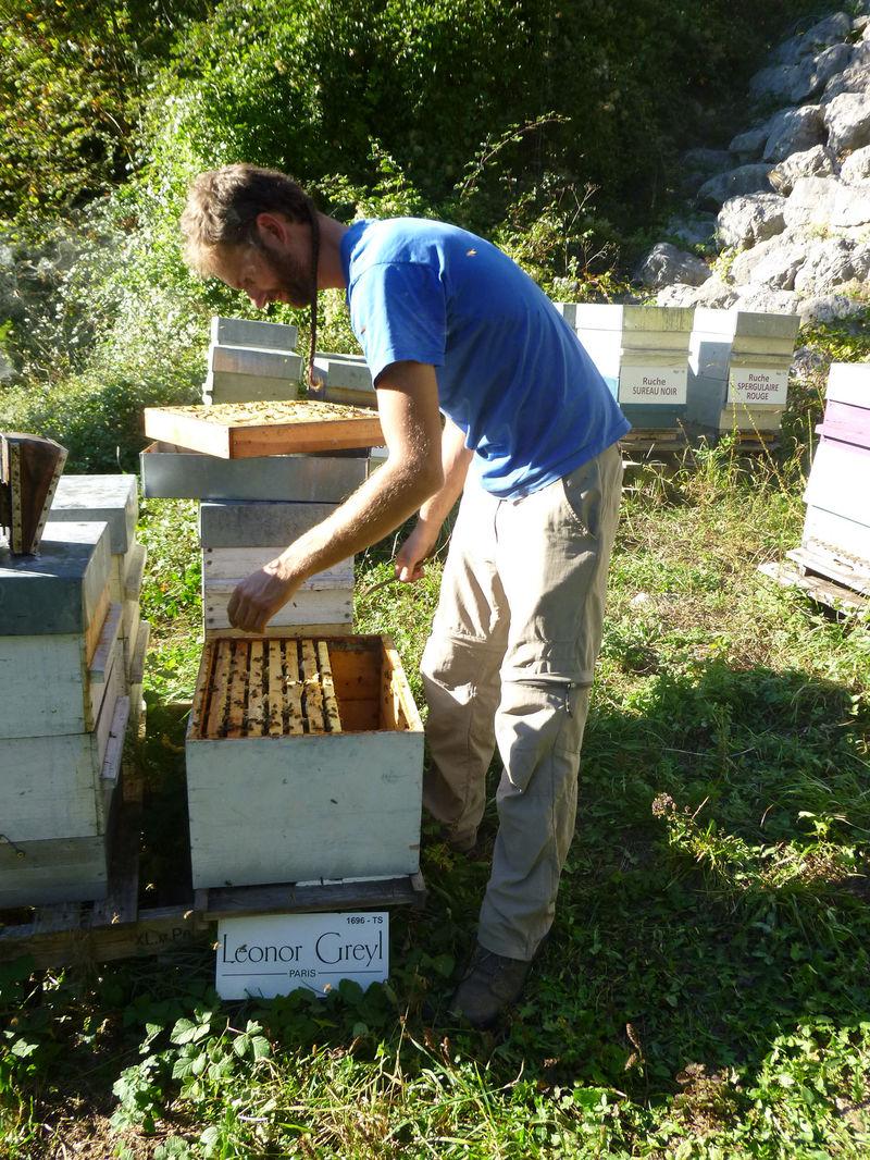 La ruche Leonor Greyl