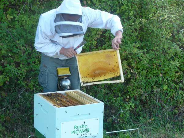 La ruche Pic mar
