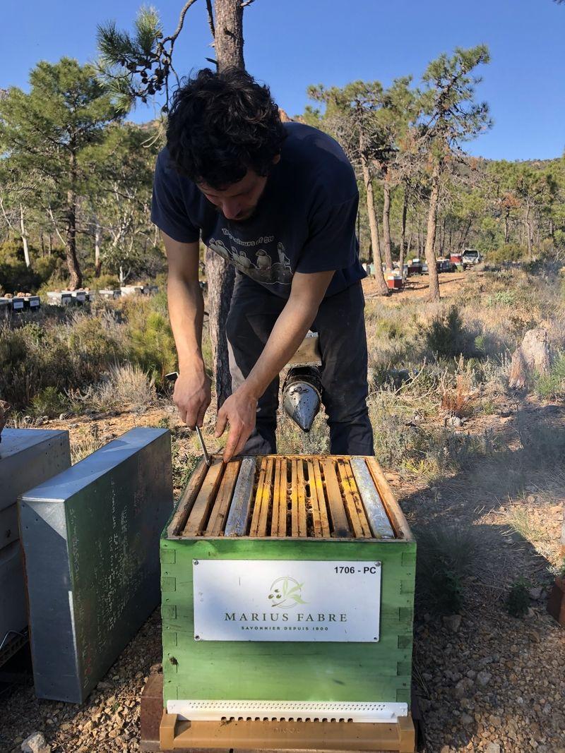 La ruche MARIUS FABRE