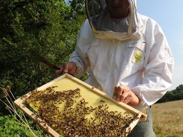 La ruche Viréo à oeil rouge