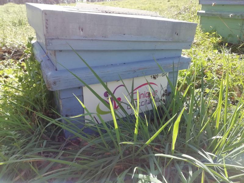 La ruche CLINIQUE D OCCITANIE