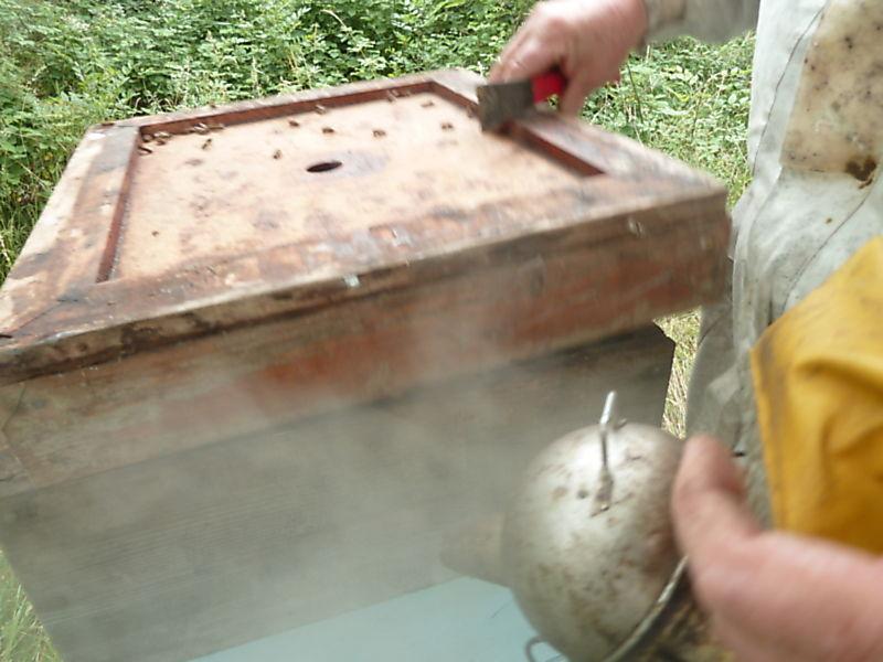 La ruche Corneille mantelée