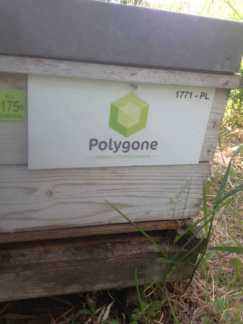 La ruche Polygone developpement