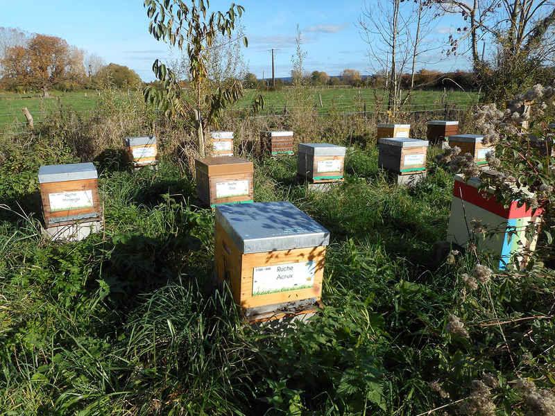 La ruche Acrux